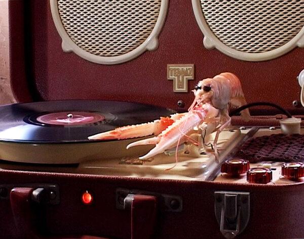 poulpe-poirier-websynradio-2970060