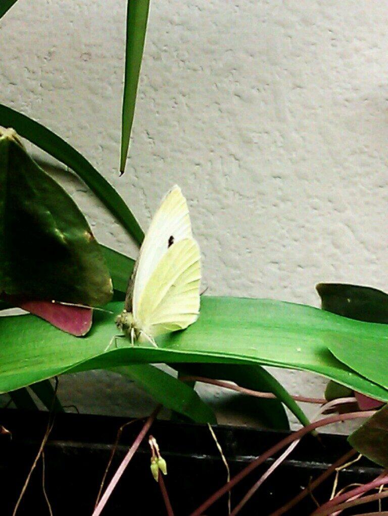 papillon2014-4944473